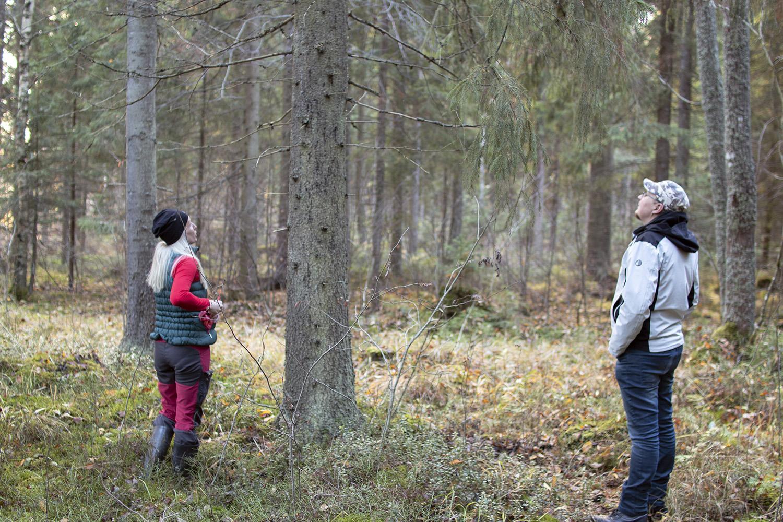 Kumppanuussopimuksemme palkitsee metsänomistajaa. Tekemällä kumppanuussopimuksen kanssamme saat henkilökohtaisen ja asiantuntevan yhteyshenkilön sekä ammattitaitoisen metsänhoitohenkilökunnan.