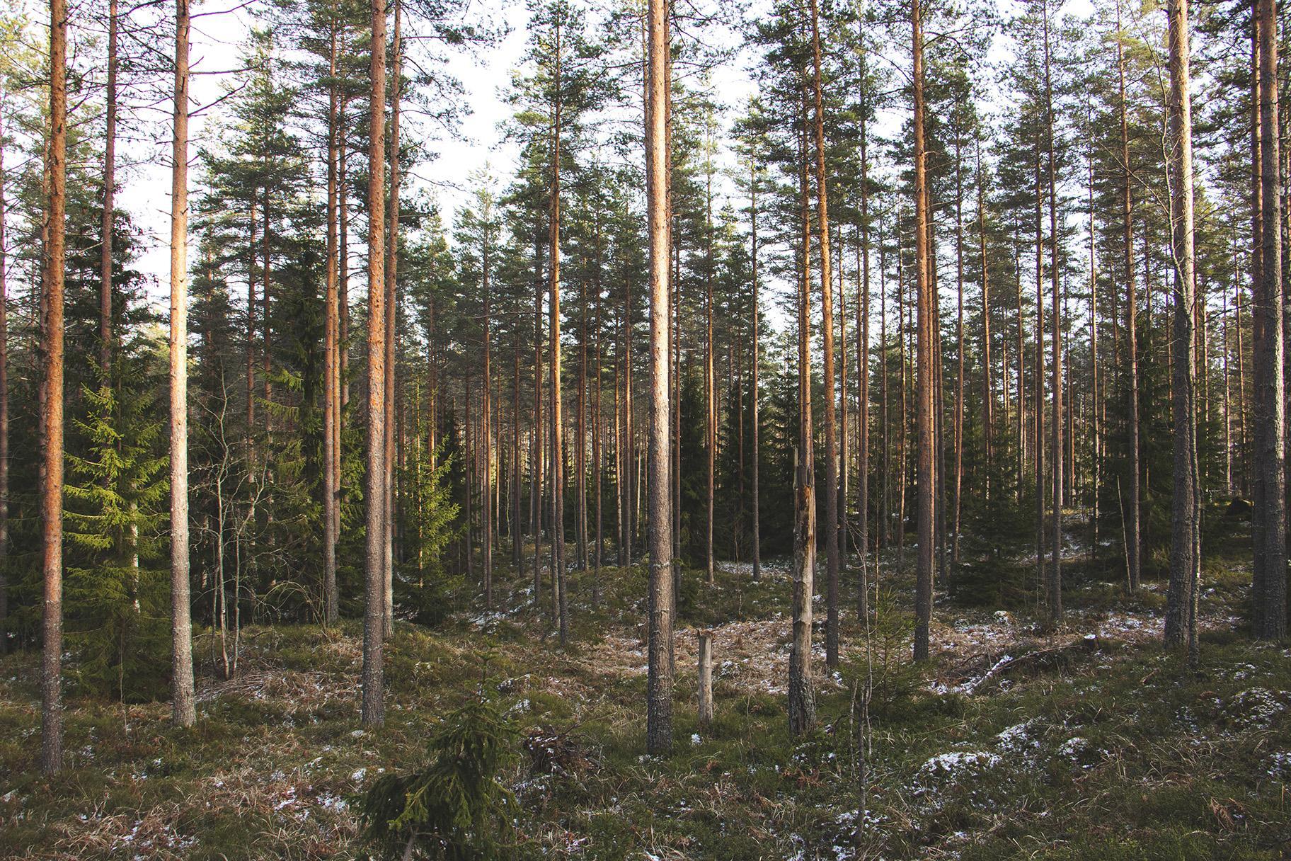 Metsätilan Sukupolvenvaihdos