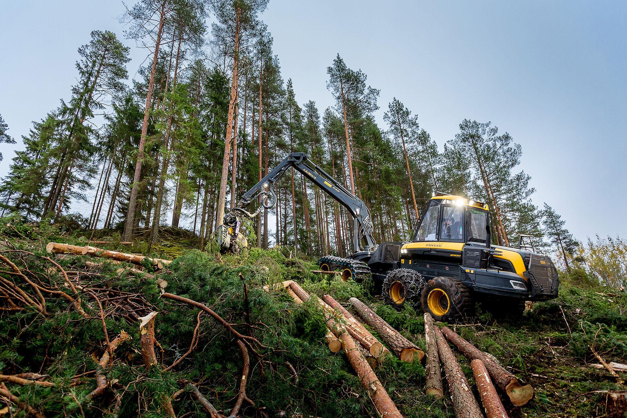 Koskisen puunhankinta, luotettava kumppanisi puukauppaan, merkittävimmät puutavaralajit havu- ja koivutukki