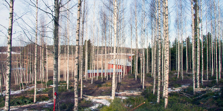 Metsän ennakkoraivauksessa poistetaan alikasvospuustoa, mikä nopeuttaa harvennusta tai korjuuta