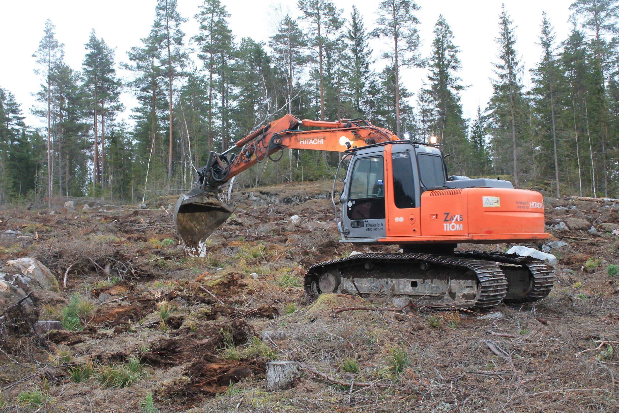 Maanmuokkauksella luodaan otolliset kasvuolosuhteet uusille puun taimille ensimmäisten kasvuvuosien ajaksi.