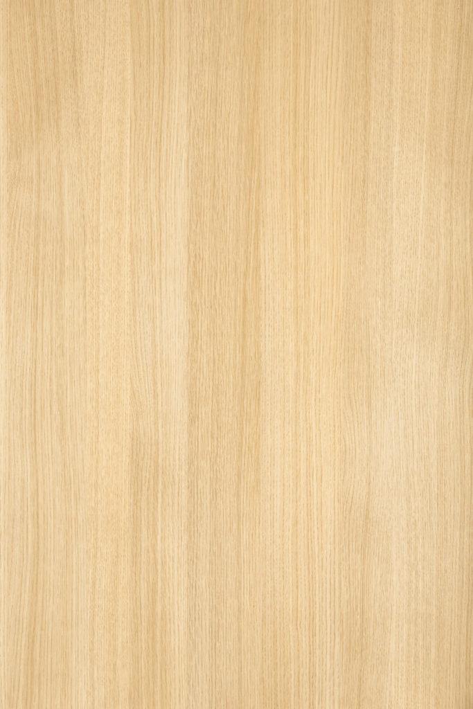Tolstoy Oak